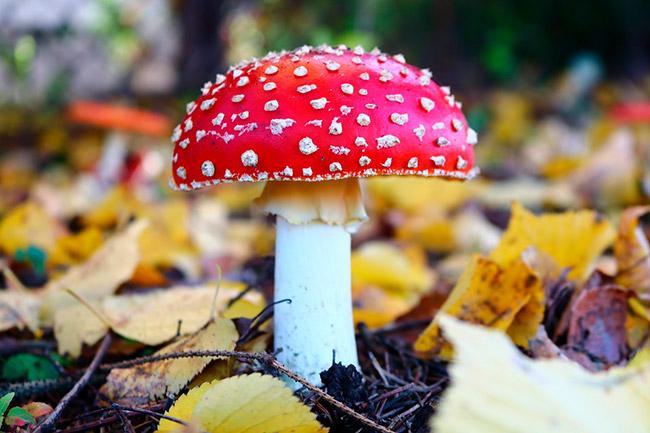 Расскажите детям о грибах. Наглядное пособие для детей 3-7 лет.