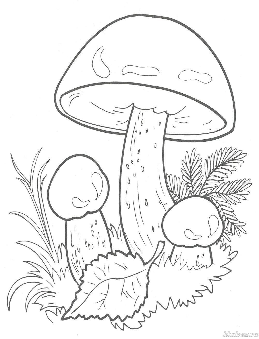 Картинки грибы разукрашки для детского сада