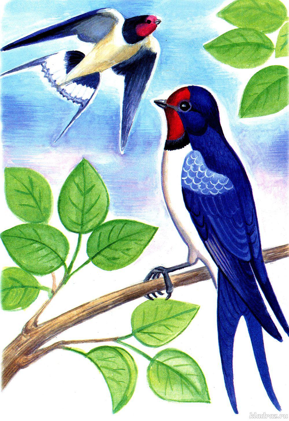 Раскраски «Перелетные птицы» для детей с названиями ...