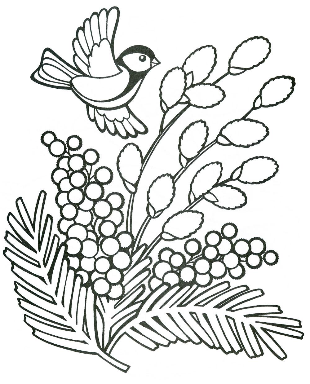 раскраска весна мимоза