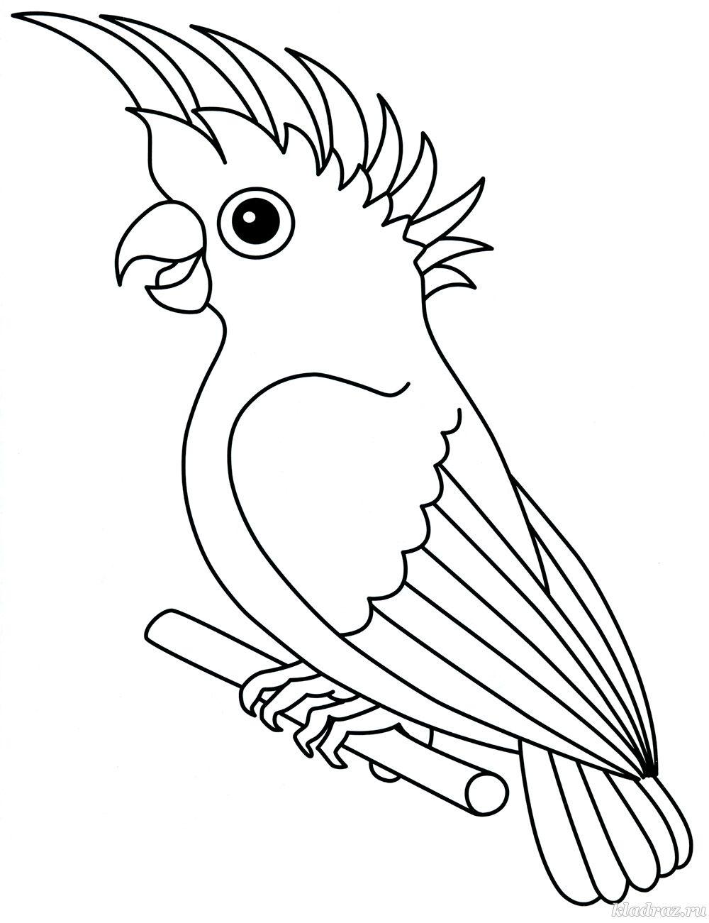 детская раскраска попугай
