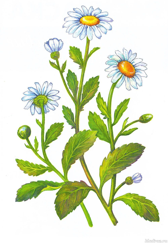 Картинки майские, цветы картинки для детей