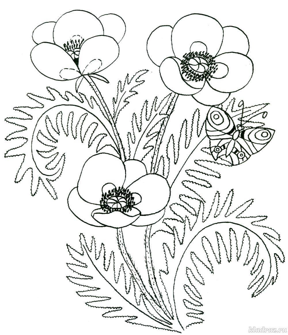 Раскраска для детей 6-7 лет. Цветы маки