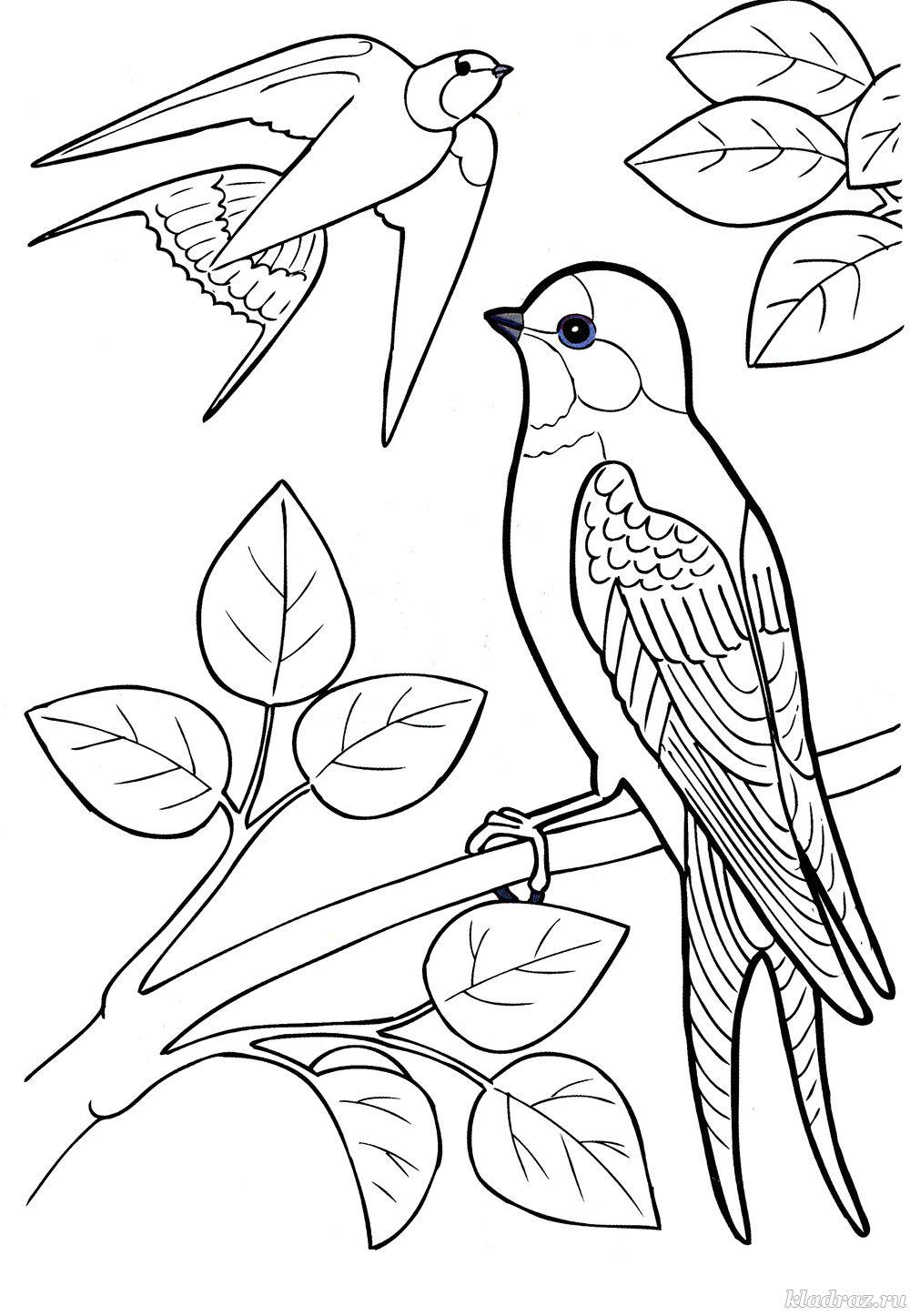 перелетные птицы печатать динамовцы вызовут