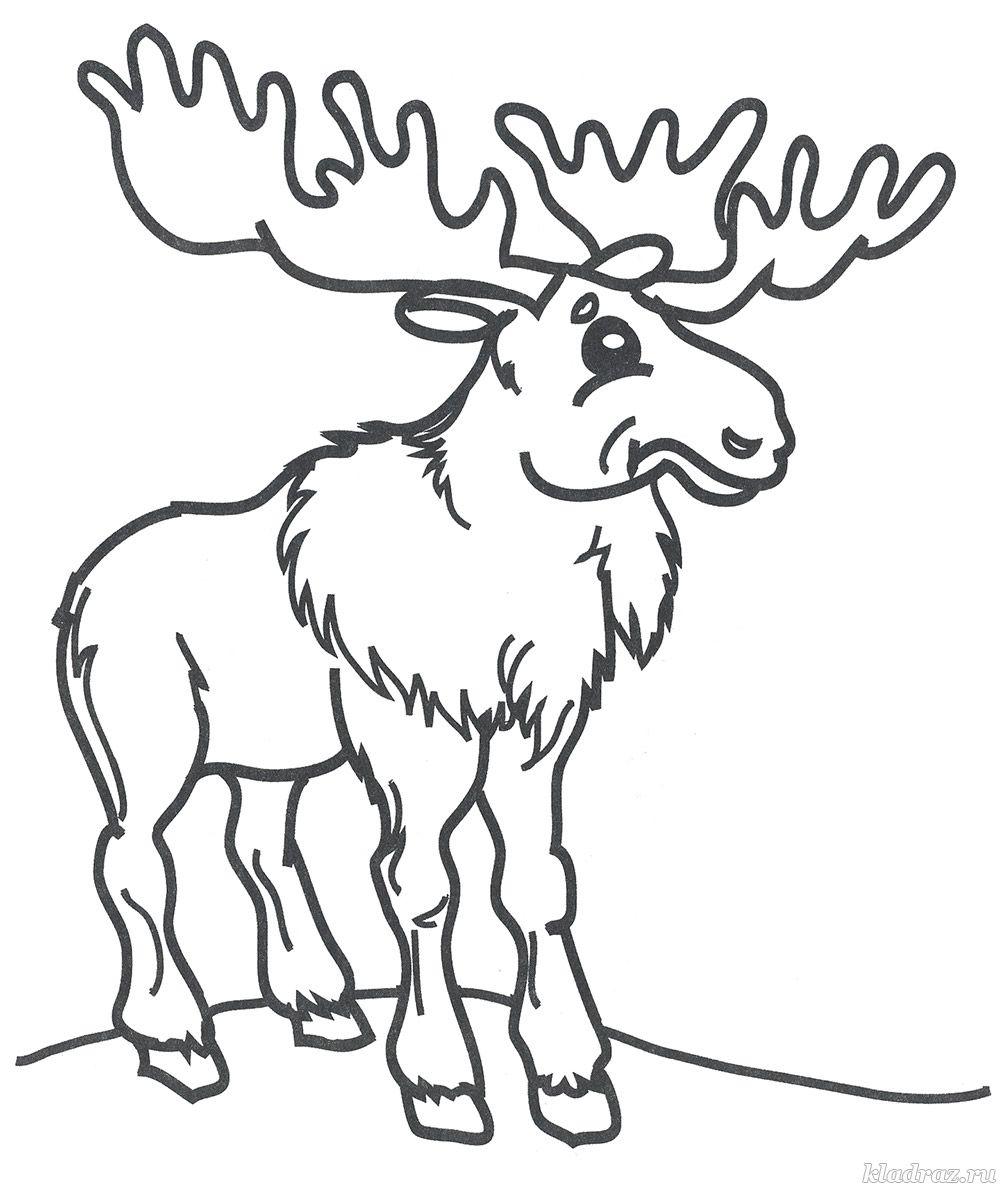 Раскраски «Дикие животные» для детей 3-4 лет распечатать ...