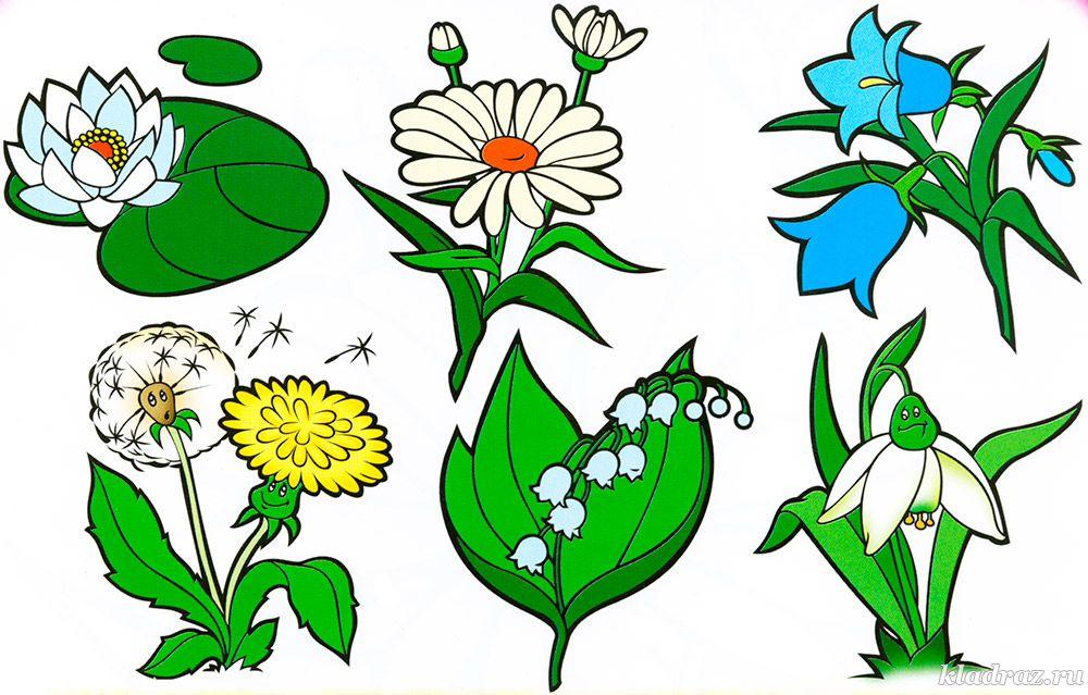 подготовленную бетонную рисунок о растениях детям этот тип