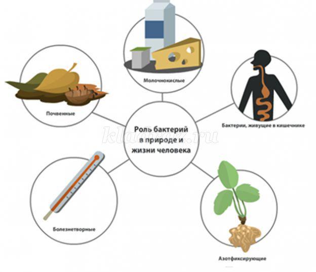 аксессуары значение бактерий в жизни человека с картинками для повышения