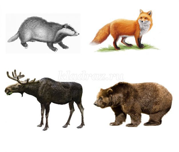 Самим создать, картинки с изображением лисы медведя волка зайца совы и их детенышей