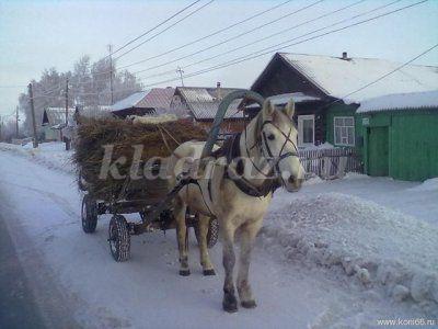 работа на конюшне в москве для подростков от