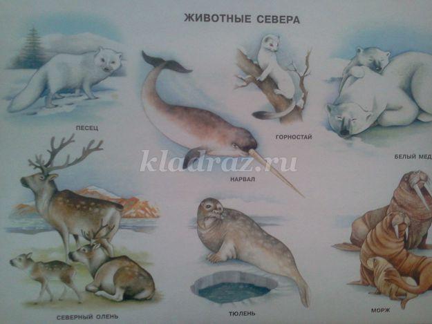 новинки, дидактические картинки животные севера отдых абхазию