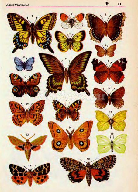 6742_f7d08fd8d2ab2dfa45052ba4ac9fe3f8 Оригами из бумаги бабочка как сделать своими руками: схема для начинающих