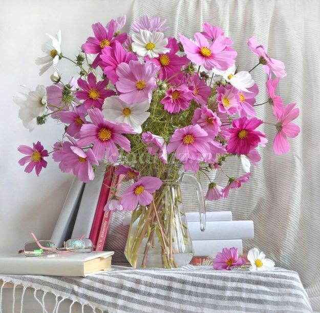 Цветы для клумбы: 110 фото и самые красивые схемы посадки цветов для клумбы