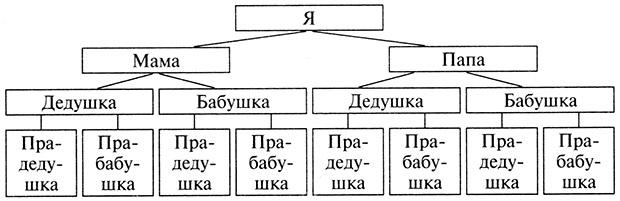 Составление родословной семьи схема
