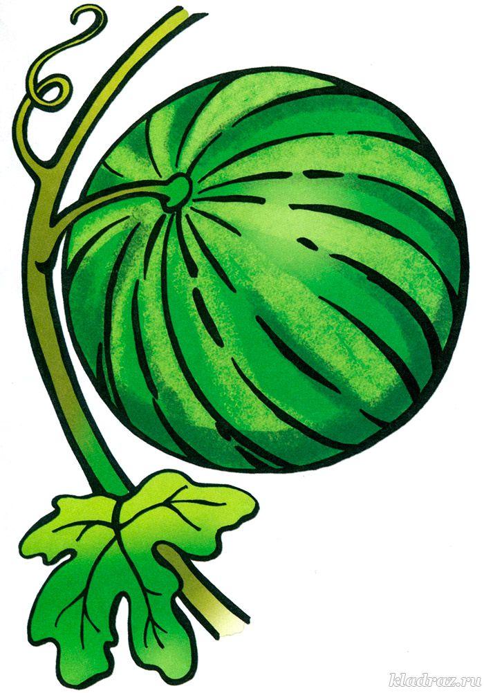 картинка арбуз для детей