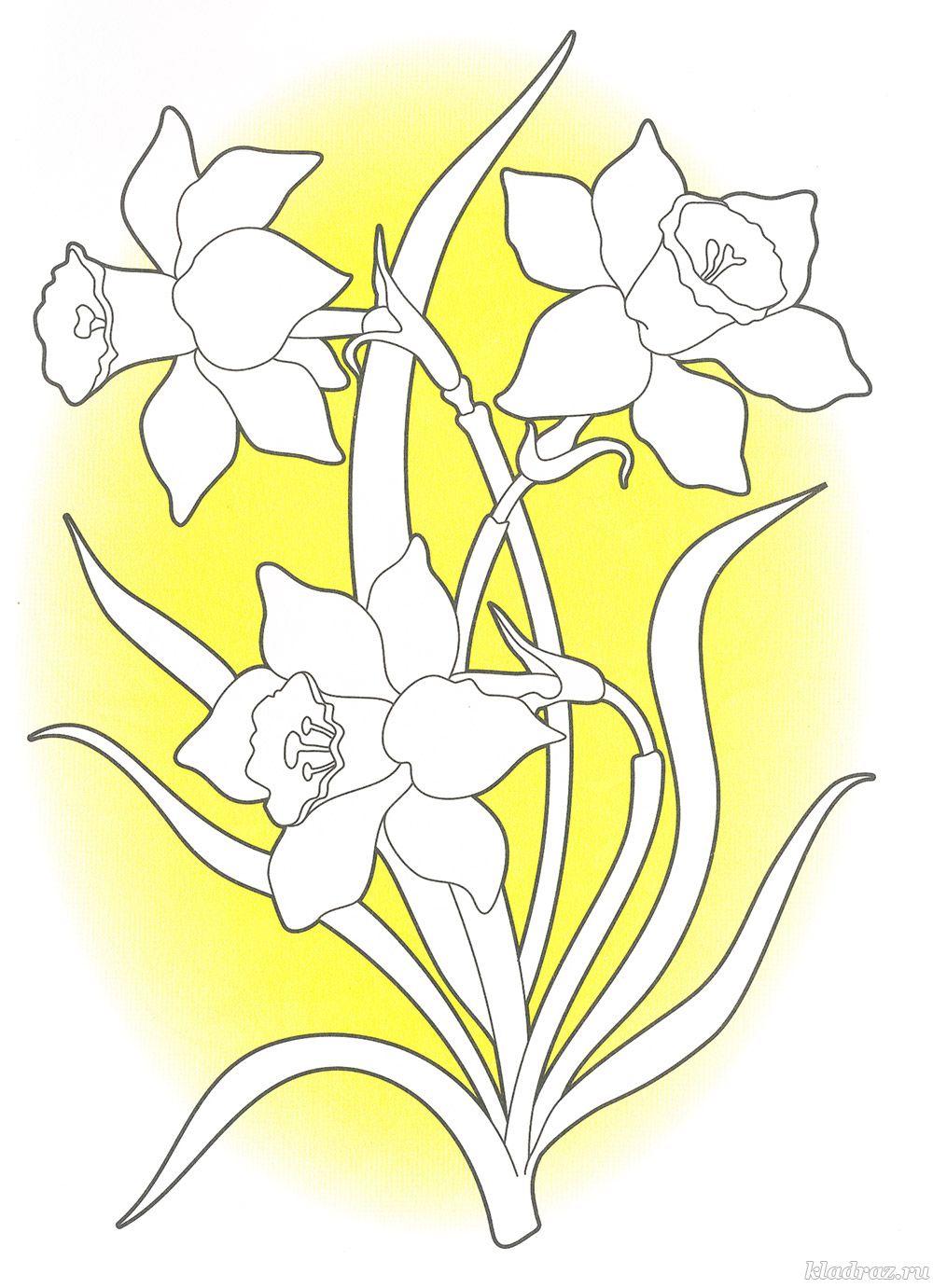 Раскраска цветка нарцисс