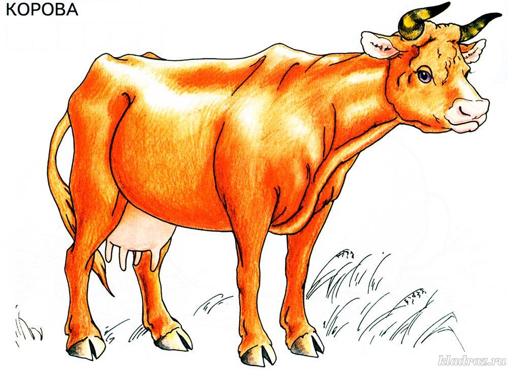 Раскраски домашние животные картинки