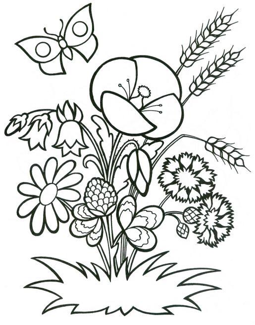 Раскраска цветы летом