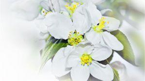 Внеклассное мероприятие к 8 марта. Праздник цветов 10-11 класс. Сценарий