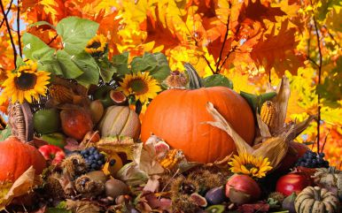 Картинки по запросу осень и дети