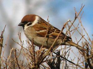Рассказы про птиц для младших школьников