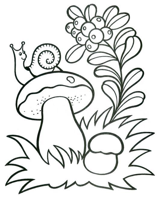 Картинка грибы для детей раскраска