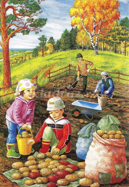 Сбор урожая на огороде картинки