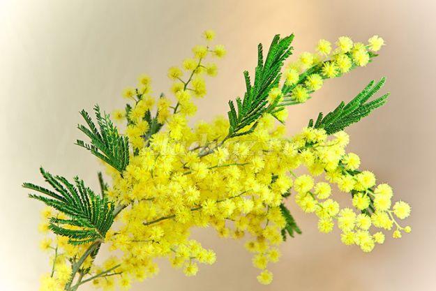 Весенние цветы на 8 марта желтые доставка цветов орхидея в горшке