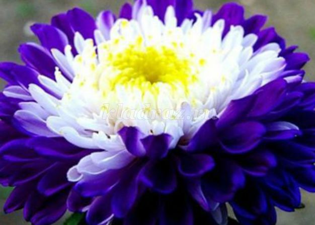 цветы являются знаком любви