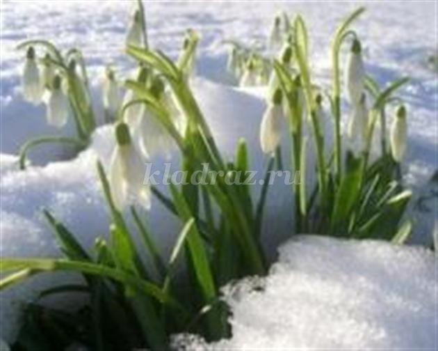 Картинки первые цветы весной для детей