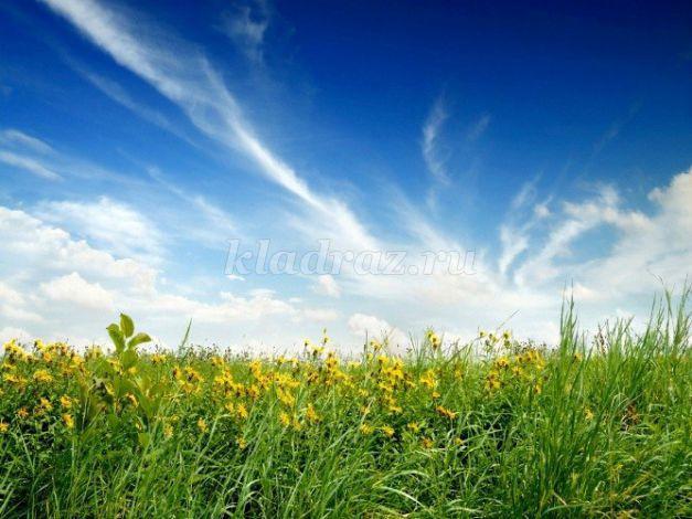Картинки по окружающему миру природа степей