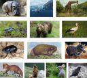 Кроссворд «Животные»