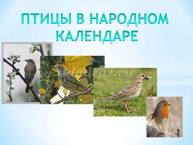 знакомство с птицами по произведениям би