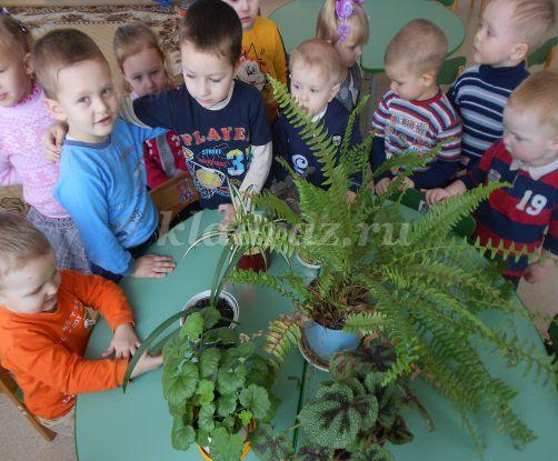Занятие по экологии для 2 младшей группы на тему