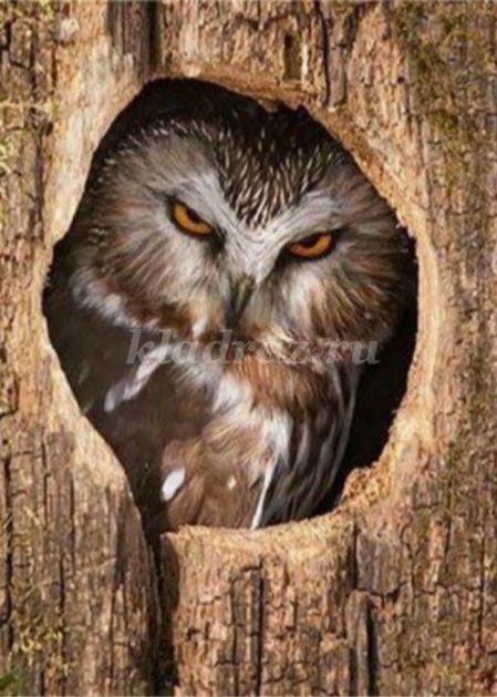 Картинки мудрой совы