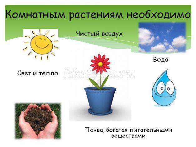 знакомство с комнатными растениями в детском саду