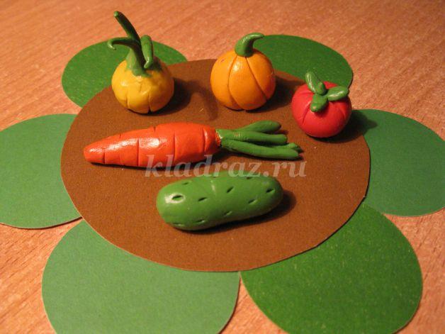 Крокусы дома - домашние растения 62